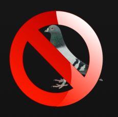 comment loigner les pigeons sans les blesser. Black Bedroom Furniture Sets. Home Design Ideas